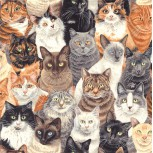 Crowded Cats